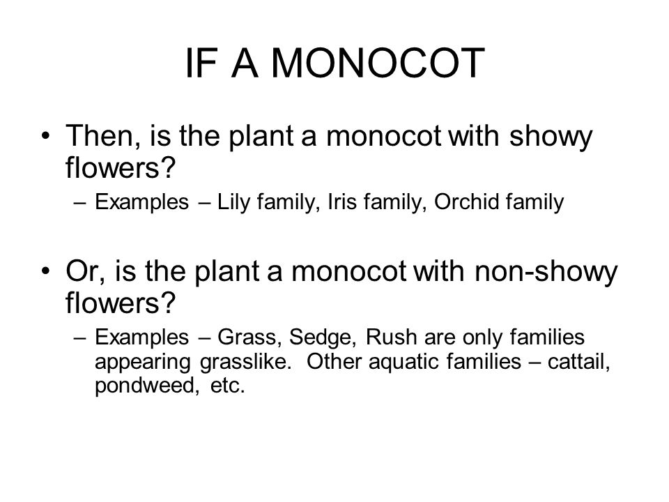 IF A MONOCOT Then, is the plant a monocot with showy flowers