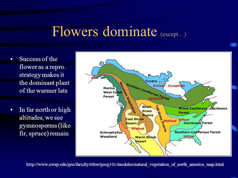 Flowers dominate (except…)