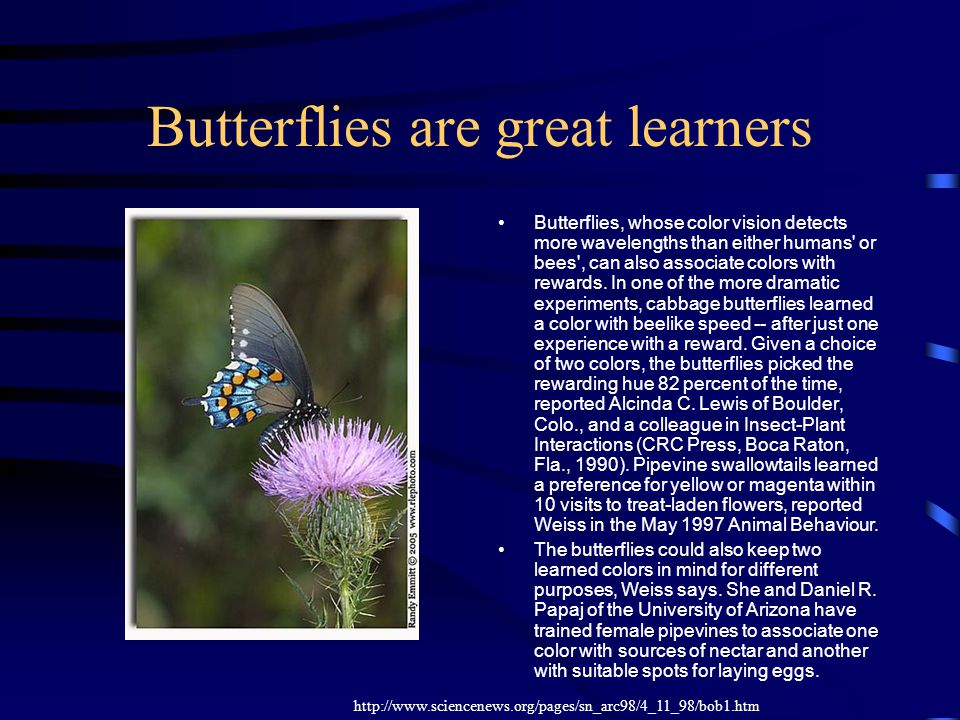 Butterflies are great learners