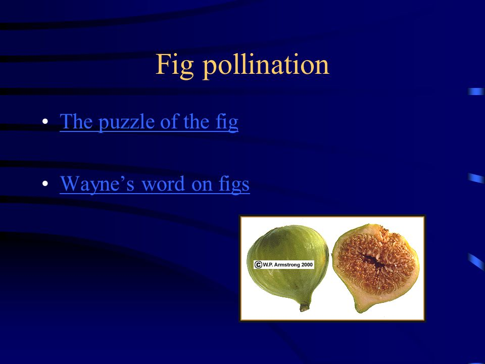 Fig pollination The puzzle of the fig Wayne's word on figs