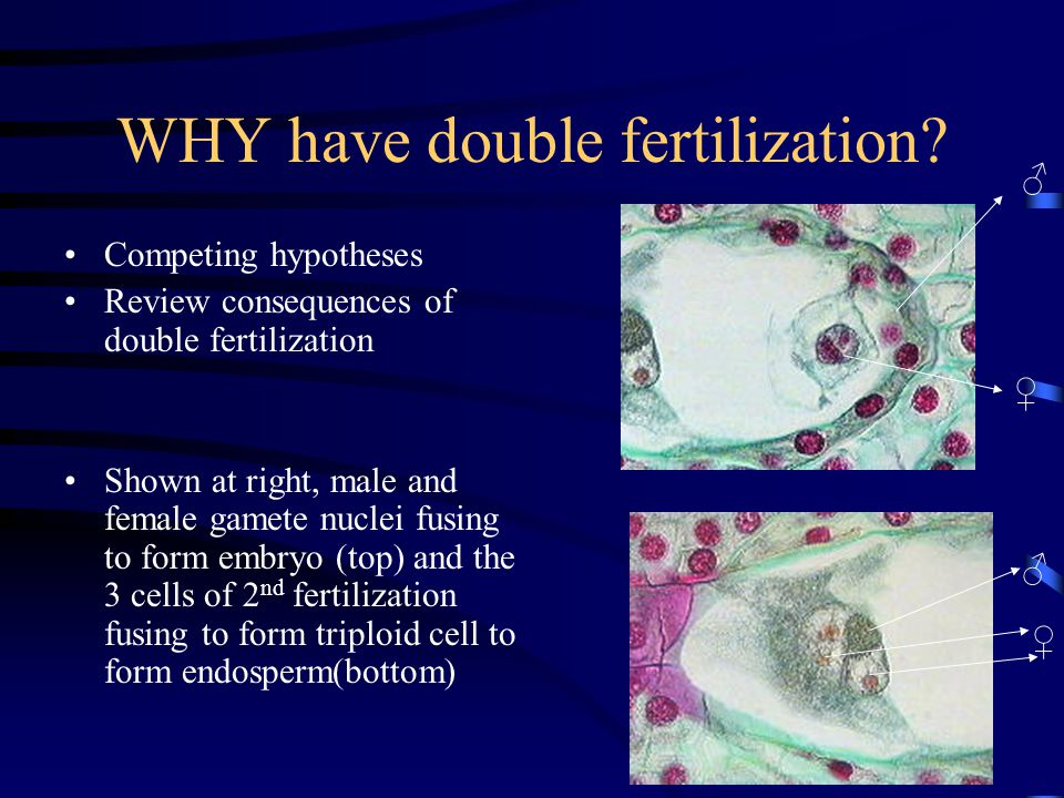 WHY have double fertilization