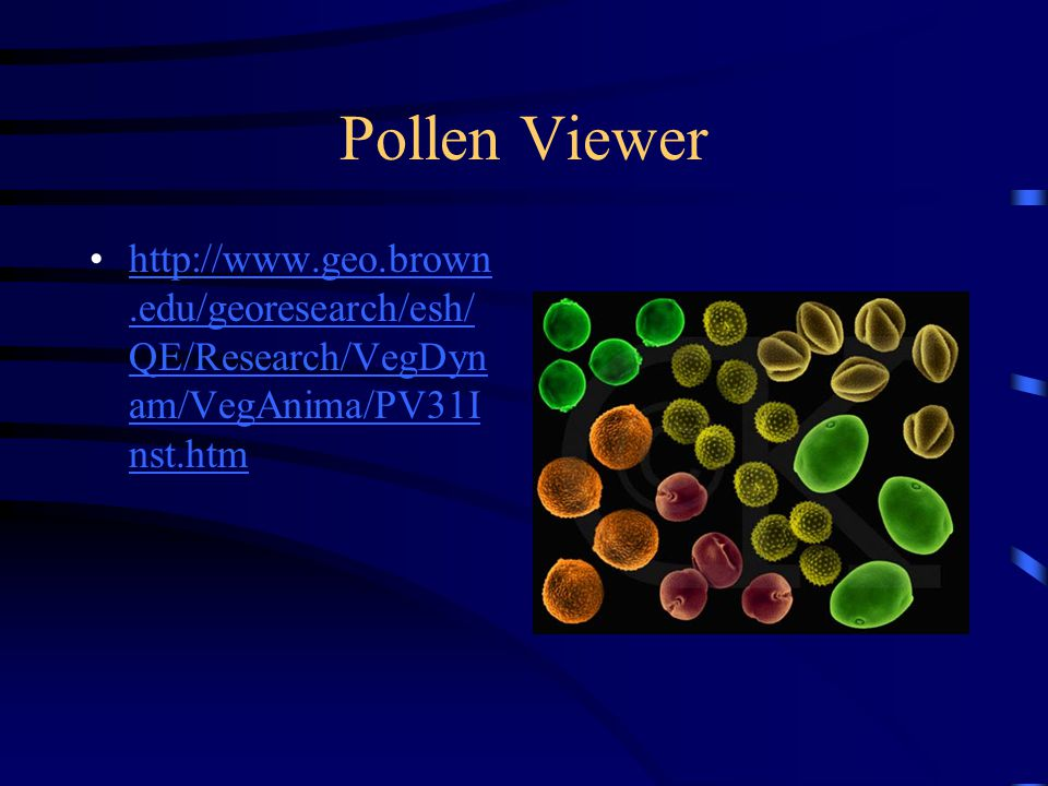Pollen Viewer http://www.geo.brown.edu/georesearch/esh/QE/Research/VegDynam/VegAnima/PV31Inst.htm