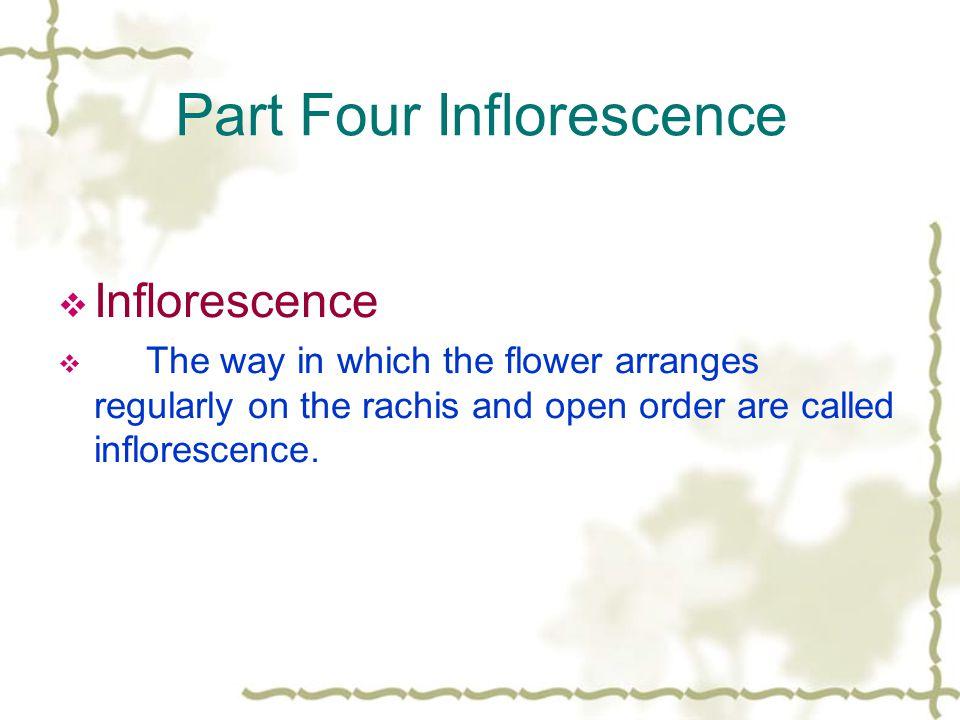 Part Four Inflorescence
