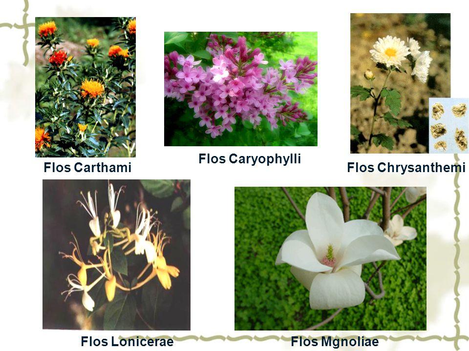 Flos Caryophylli Flos Carthami Flos Chrysanthemi Flos Lonicerae Flos Mgnoliae