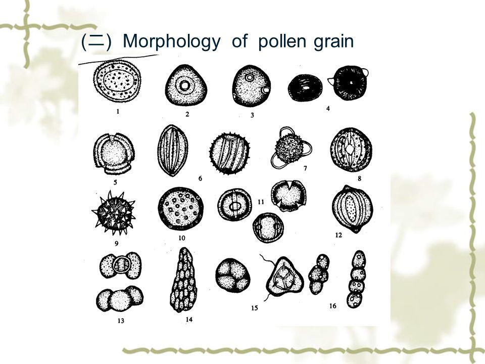 (二) Morphology of pollen grain