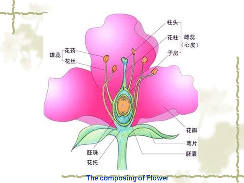 The composing of Flower
