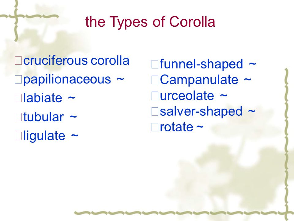 the Types of Corolla ☆cruciferous corolla ☆funnel-shaped ~