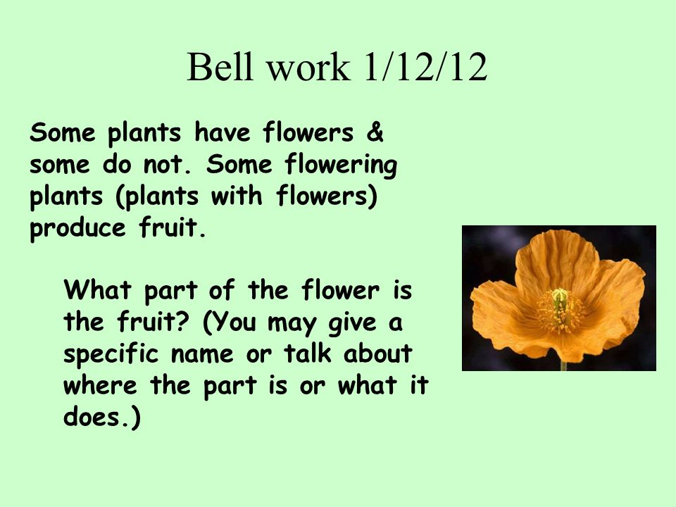Bell work 1/12/12 Some plants have flowers & some do not. Some flowering plants (plants with flowers) produce fruit.