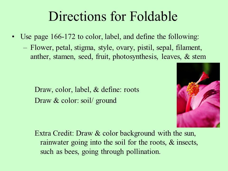Directions for Foldable