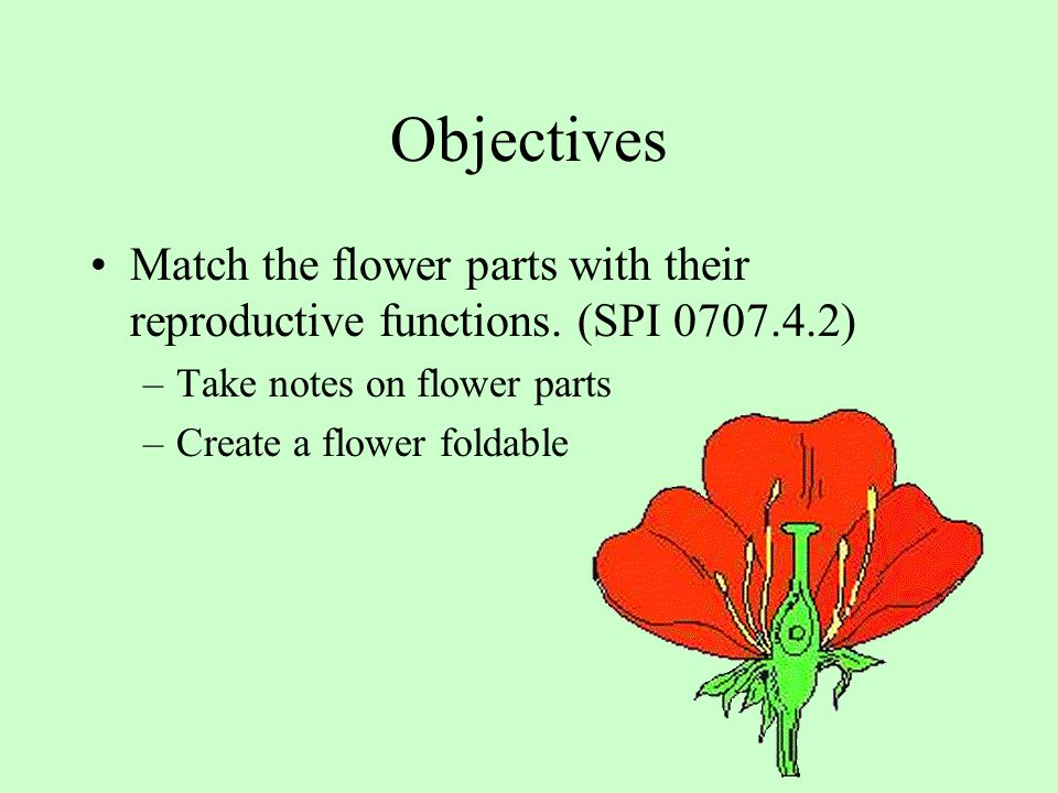 Objectives Match the flower parts with their reproductive functions. (SPI 0707.4.2) Take notes on flower parts.