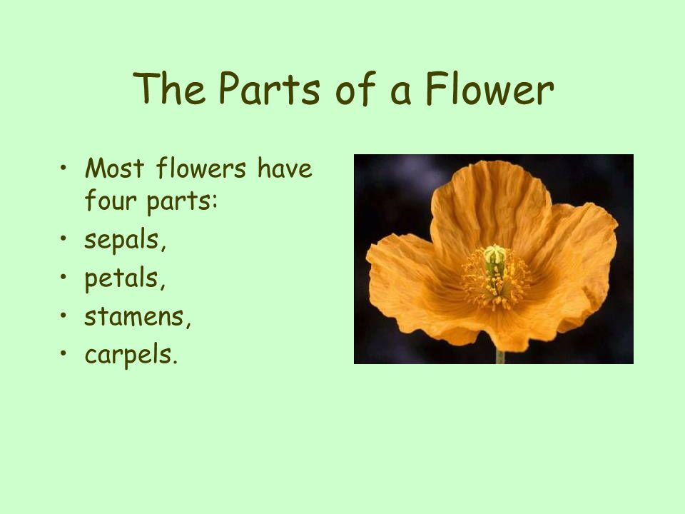 The Parts of a Flower Most flowers have four parts: sepals, petals,