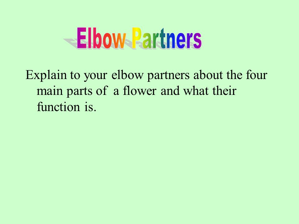 Elbow Partners Explain to your elbow partners about the four main parts of a flower and what their function is.