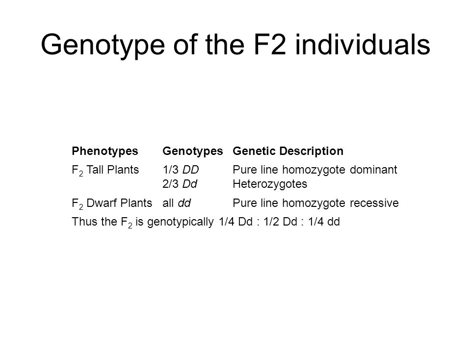 Genotype of the F2 individuals