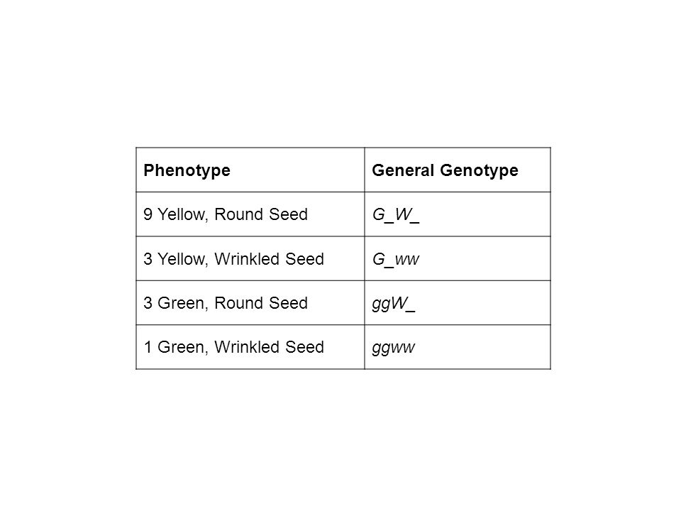 Phenotype General Genotype. 9 Yellow, Round Seed. G_W_. 3 Yellow, Wrinkled Seed. G_ww. 3 Green, Round Seed.