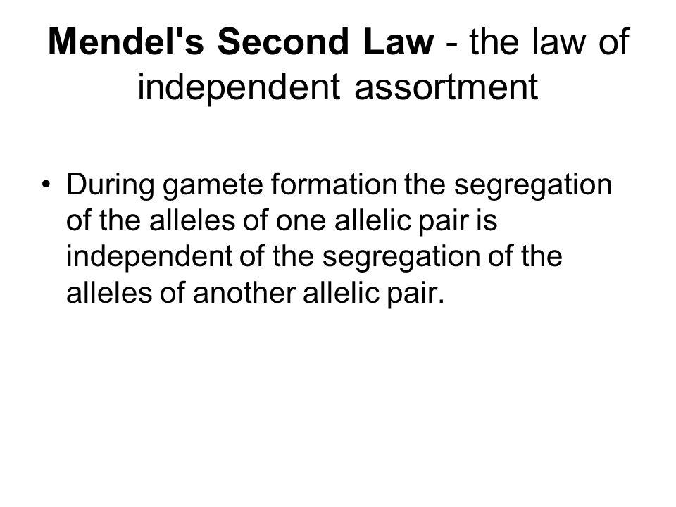 Mendel s Second Law - the law of independent assortment