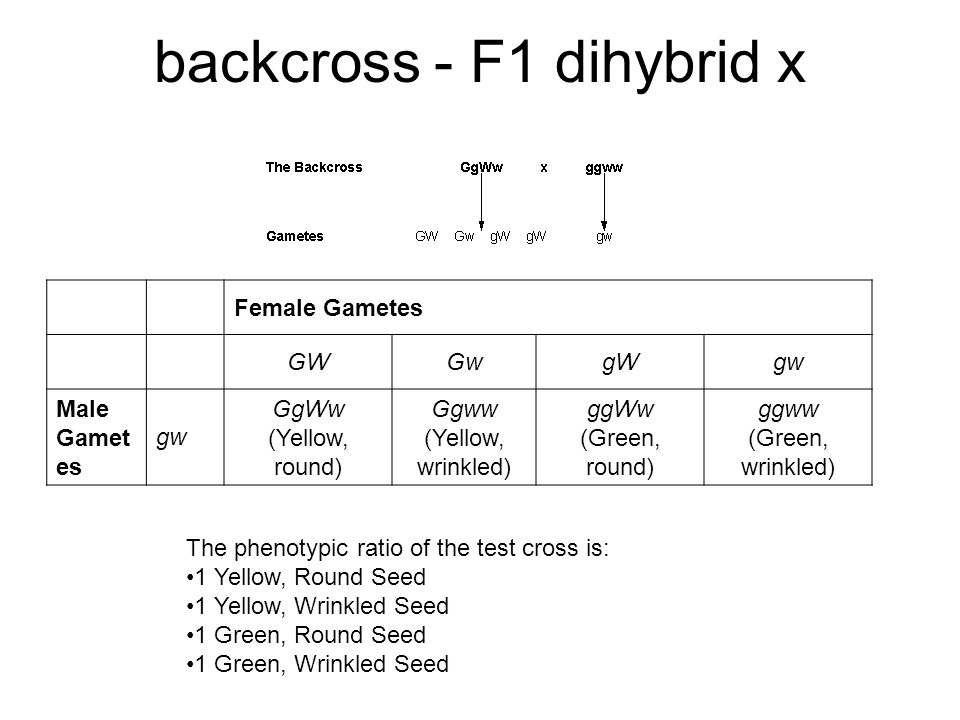 backcross - F1 dihybrid x