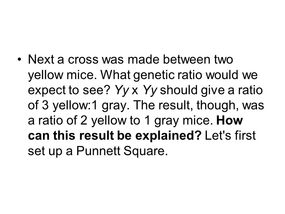 Next a cross was made between two yellow mice