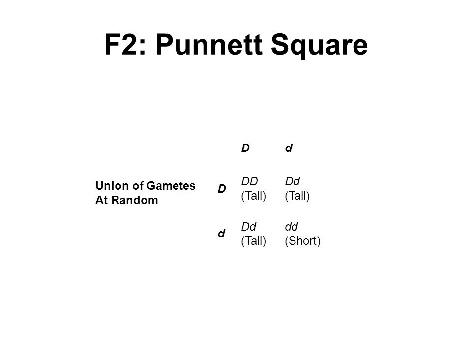 F2: Punnett Square Union of Gametes At Random D d DD (Tall) Dd (Tall)