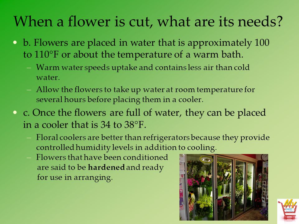 When a flower is cut, what are its needs