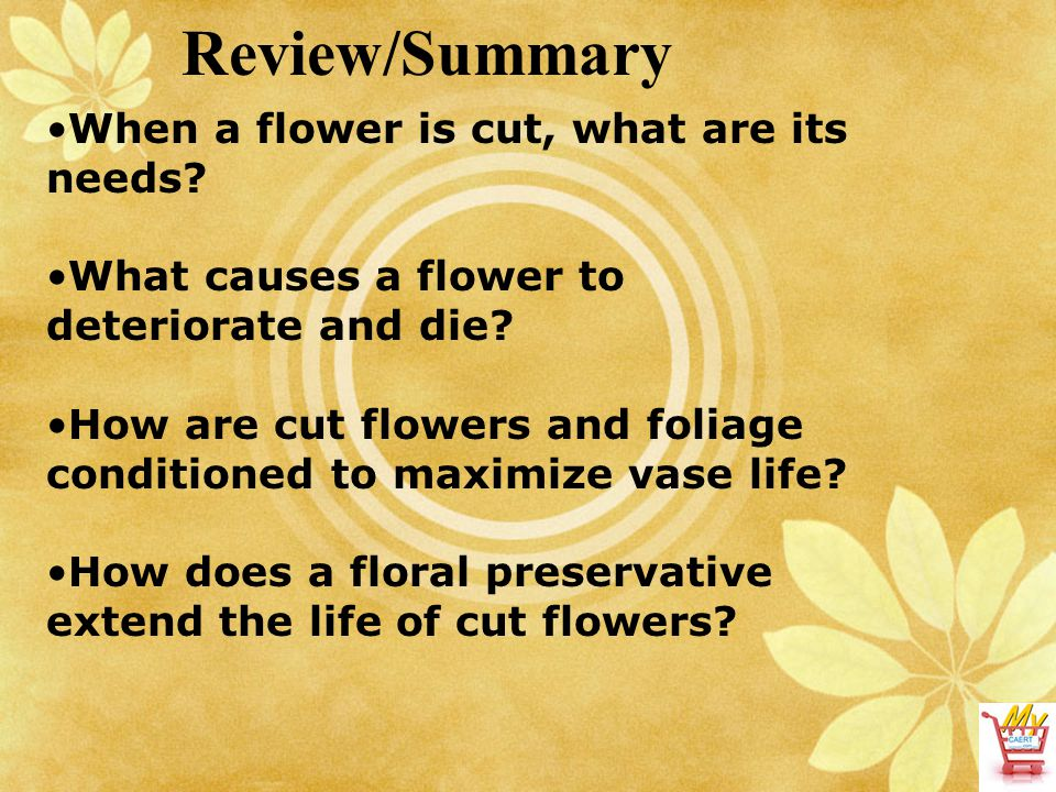 Review/Summary When a flower is cut, what are its needs