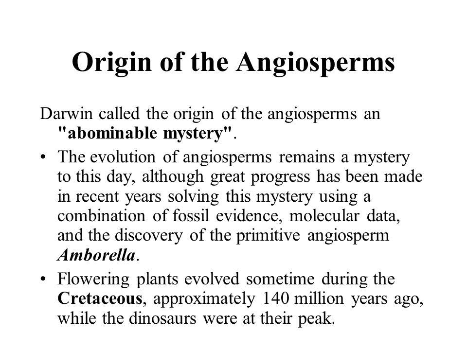 Origin of the Angiosperms