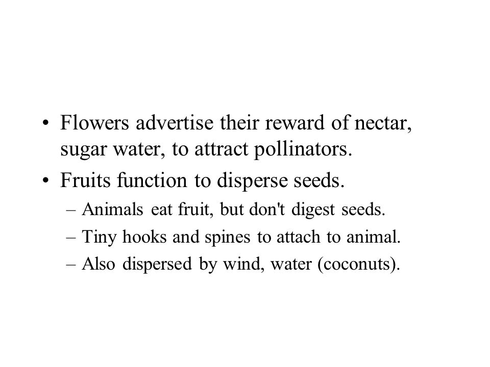 Fruits function to disperse seeds.