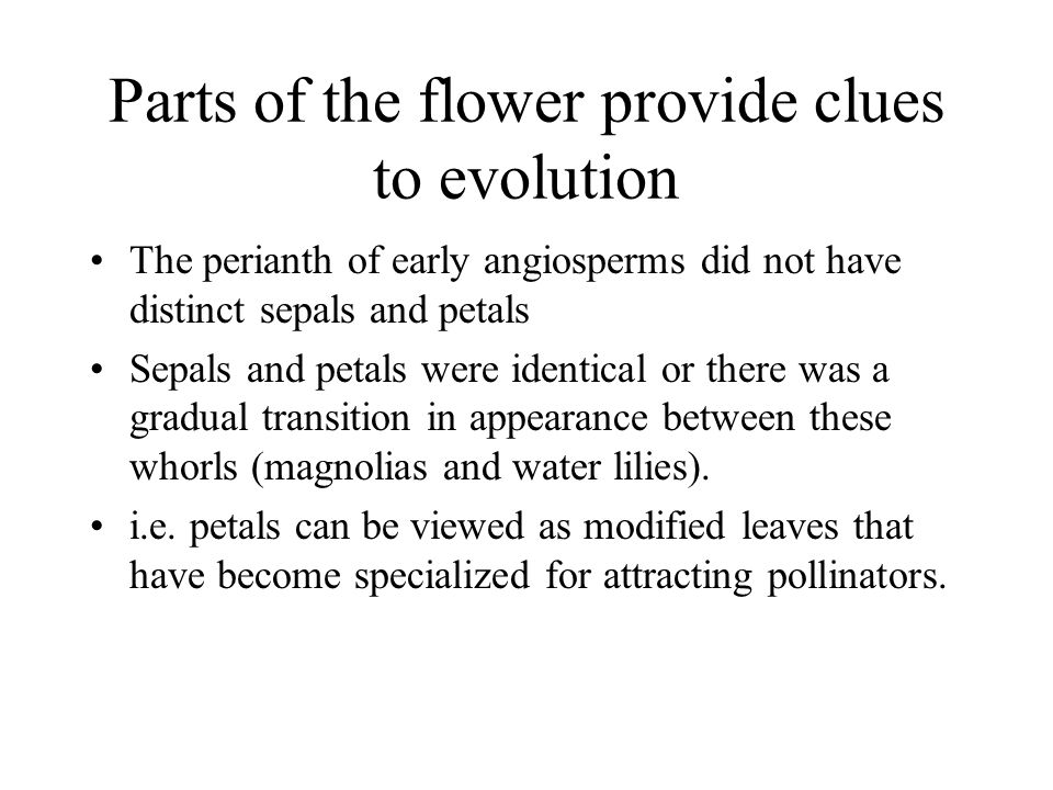 Parts of the flower provide clues to evolution
