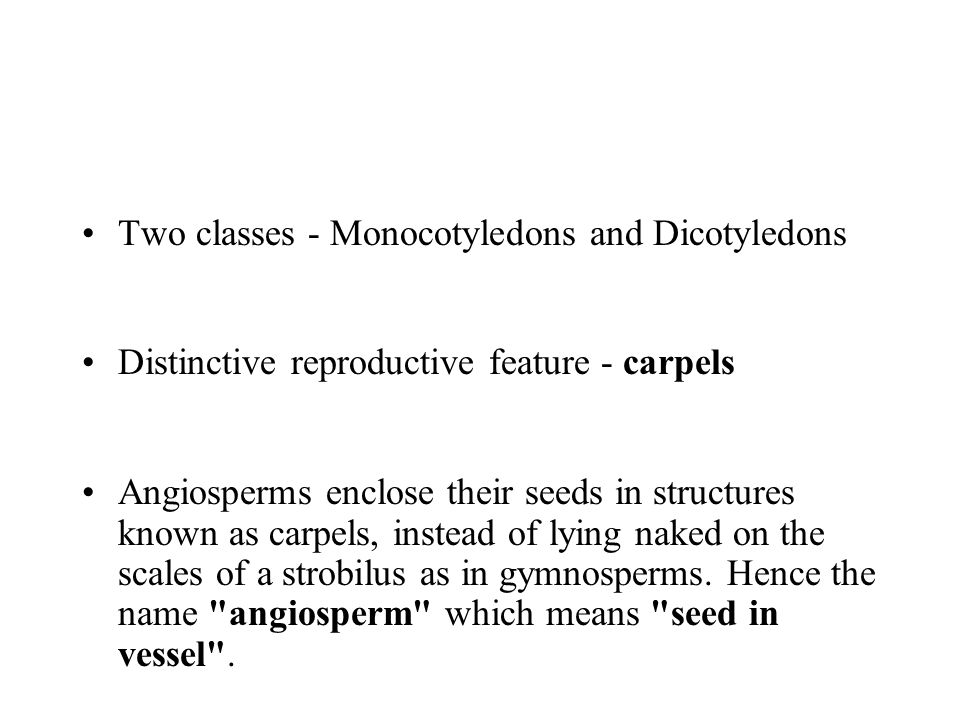 Two classes - Monocotyledons and Dicotyledons