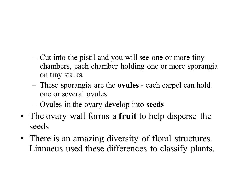 The ovary wall forms a fruit to help disperse the seeds