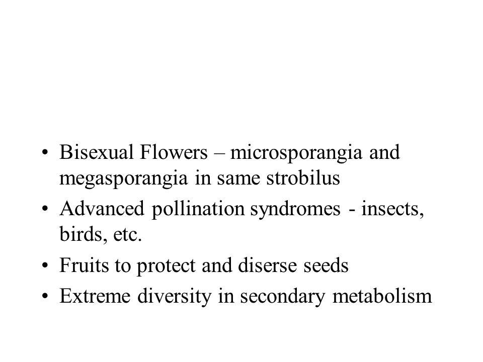 Bisexual Flowers – microsporangia and megasporangia in same strobilus
