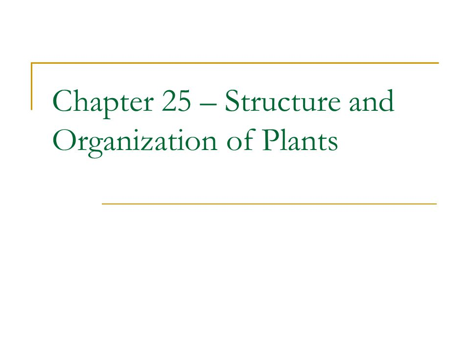 Chapter 25 – Structure and Organization of Plants