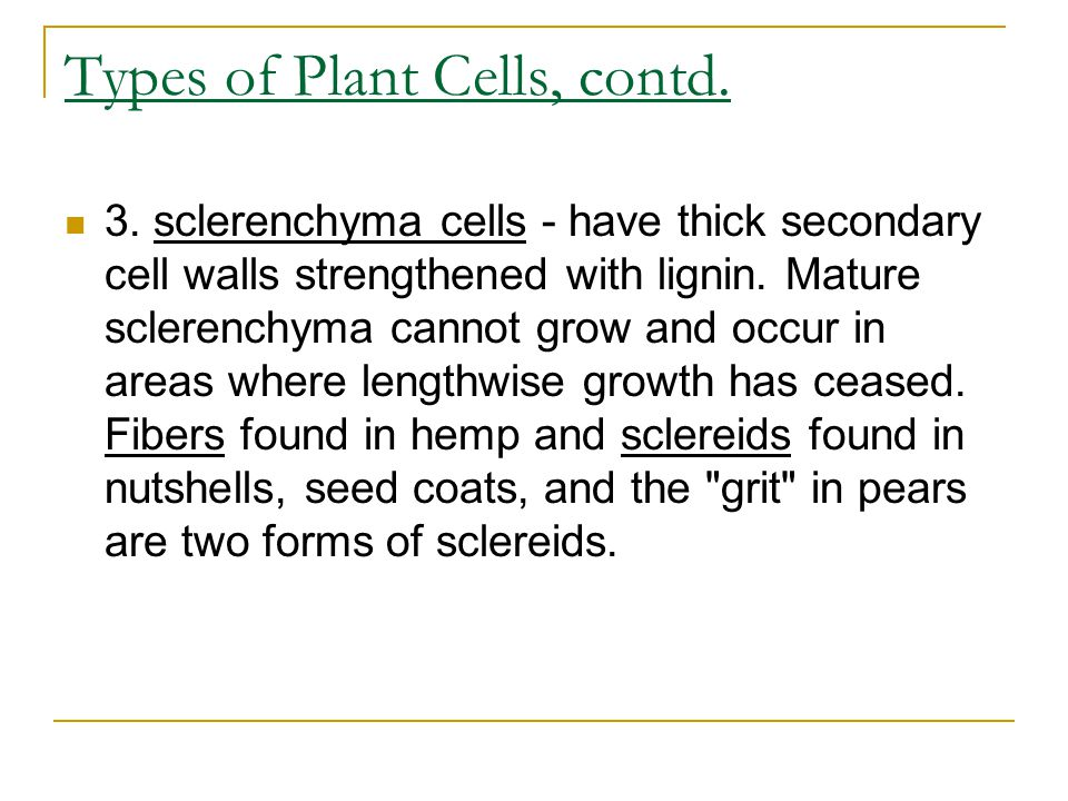 Types of Plant Cells, contd.