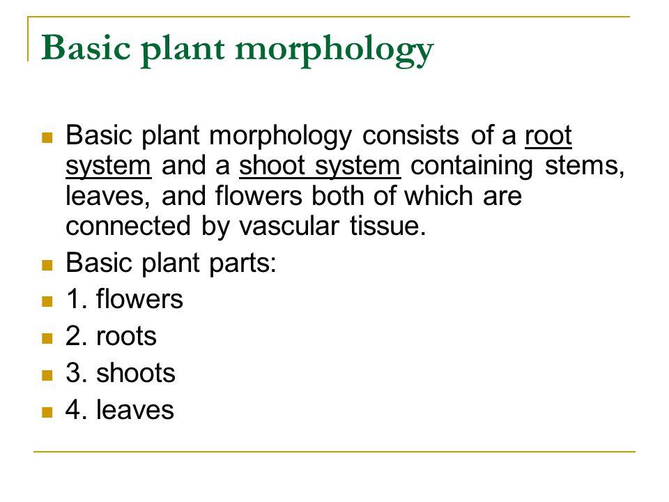 Basic plant morphology