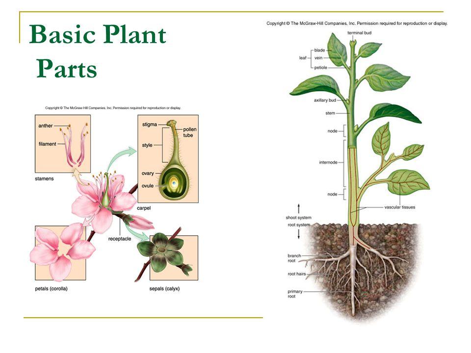 Basic Plant Parts