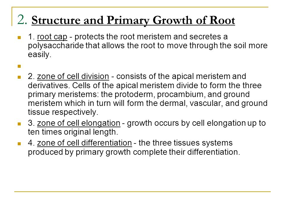 2. Structure and Primary Growth of Root