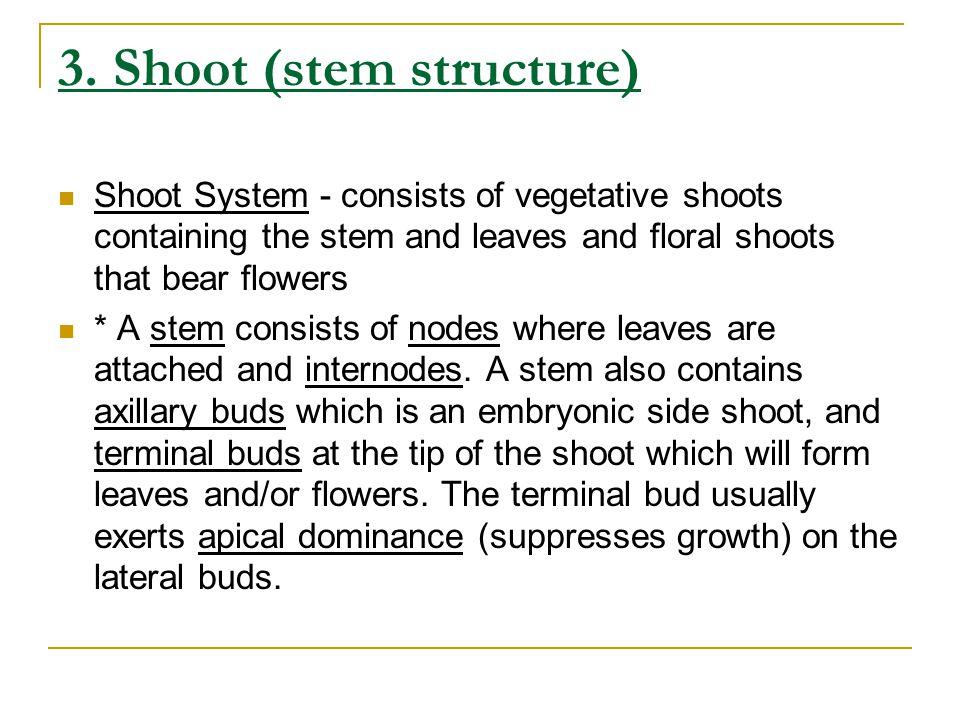 3. Shoot (stem structure)