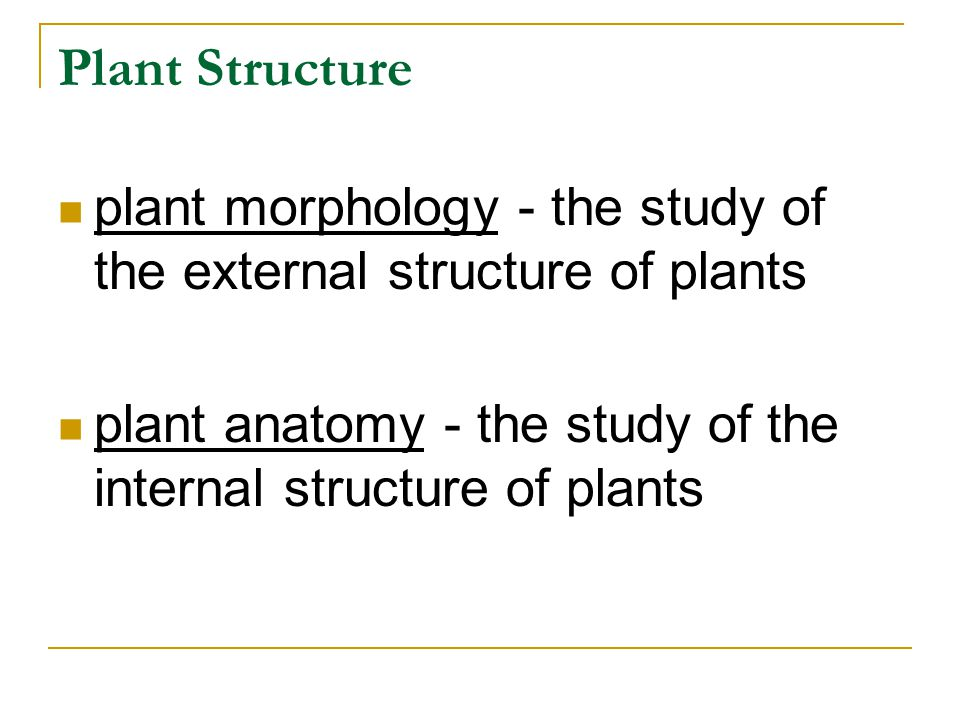 Plant Structure plant morphology - the study of the external structure of plants.