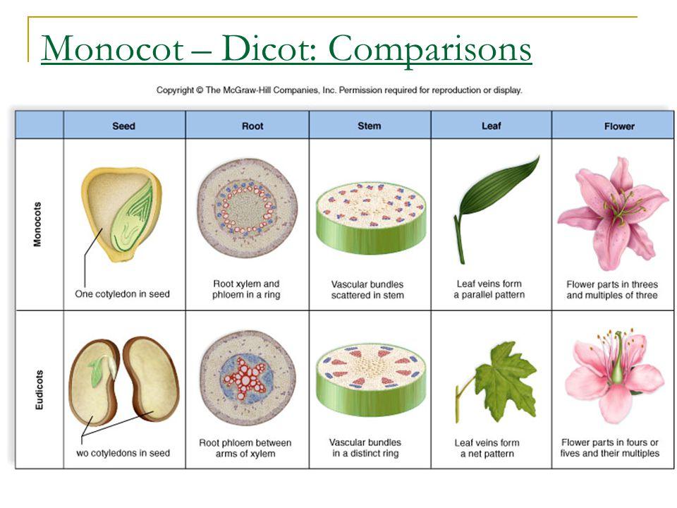 Monocot – Dicot: Comparisons