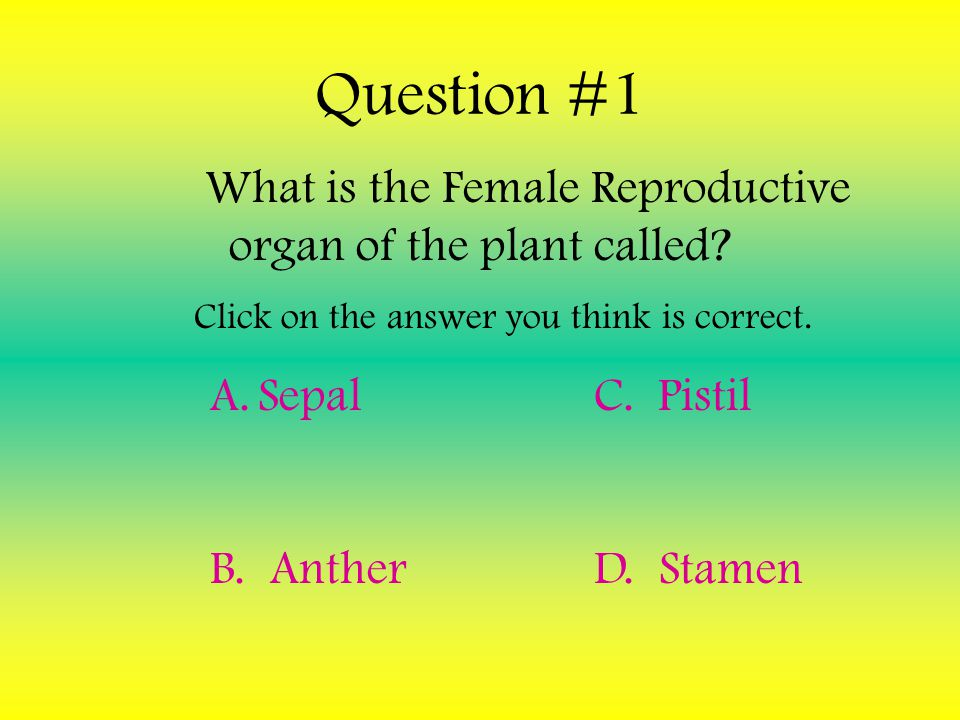 What is the Female Reproductive organ of the plant called