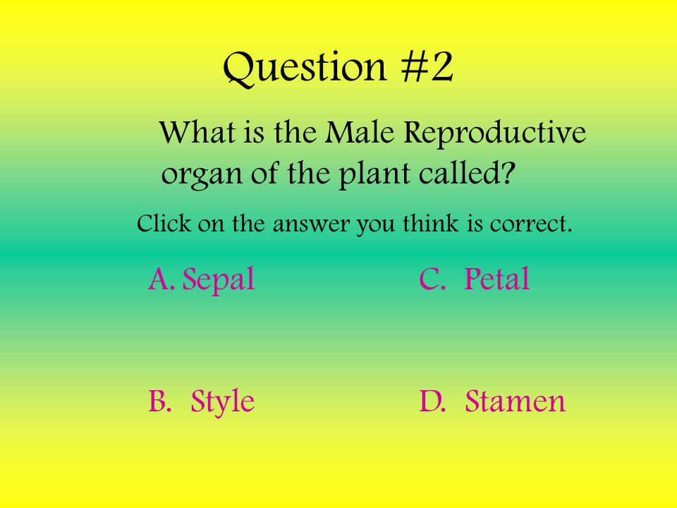What is the Male Reproductive organ of the plant called