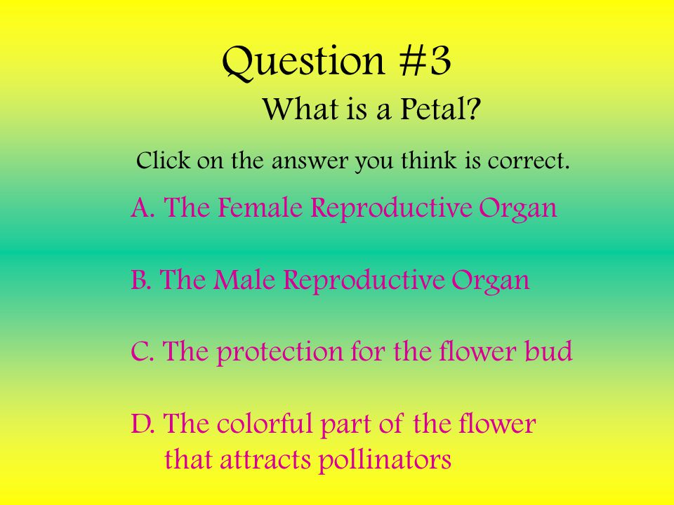Question #3 The Female Reproductive Organ