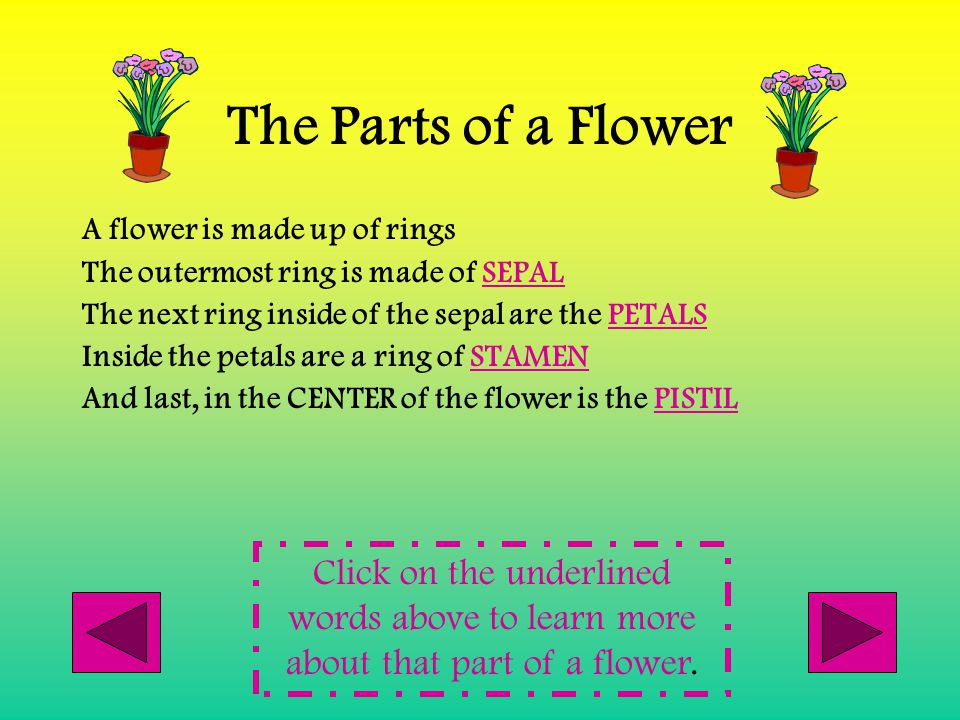 The Parts of a Flower A flower is made up of rings. The outermost ring is made of SEPAL. The next ring inside of the sepal are the PETALS.