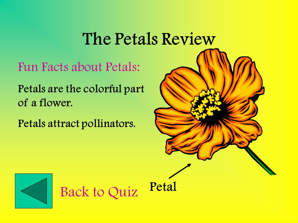 The Petals Review Back to Quiz Fun Facts about Petals: Petal