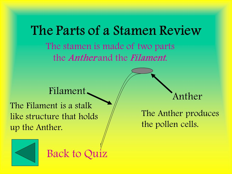 The Parts of a Stamen Review