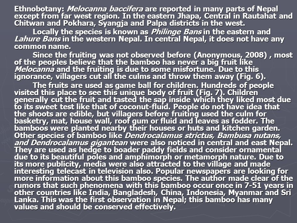 Ethnobotany: Melocanna baccifera are reported in many parts of Nepal except from far west region. In the eastern Jhapa, Central in Rautahat and Chitwan and Pokhara, Syangja and Palpa districts in the west.