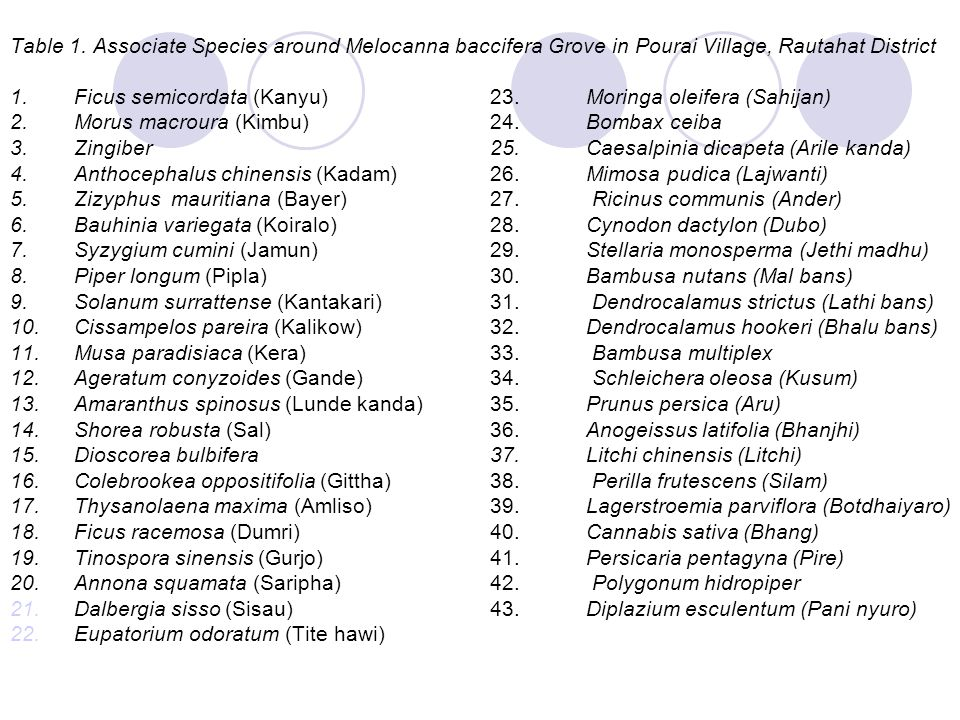 Table 1. Associate Species around Melocanna baccifera Grove in Pourai Village, Rautahat District