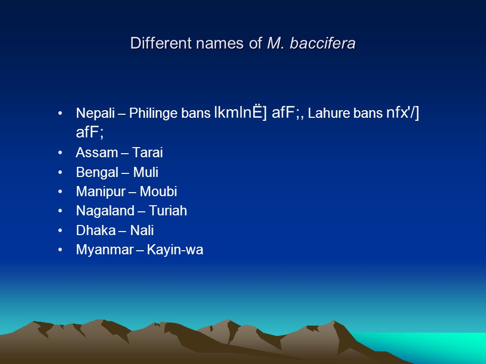 Different names of M. baccifera