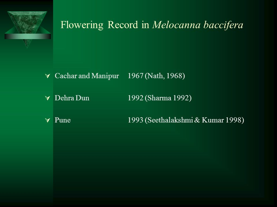 Flowering Record in Melocanna baccifera