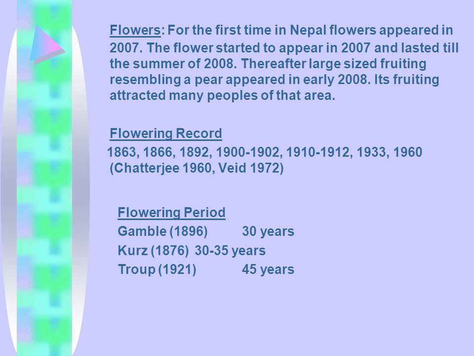 Flowers: For the first time in Nepal flowers appeared in 2007