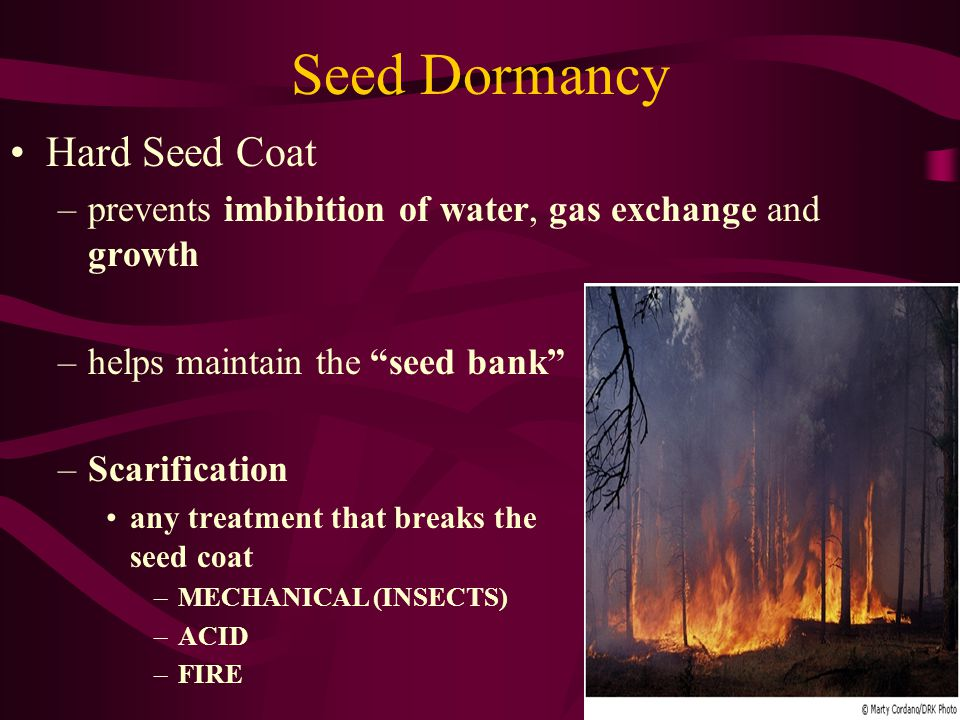 Seed Dormancy Hard Seed Coat